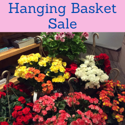 Hanging Basket Sale. Links to hanging basket sale page.